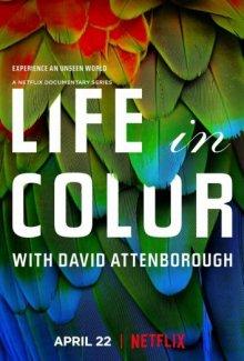 Жизнь в цвете с Дэвидом Аттенборо